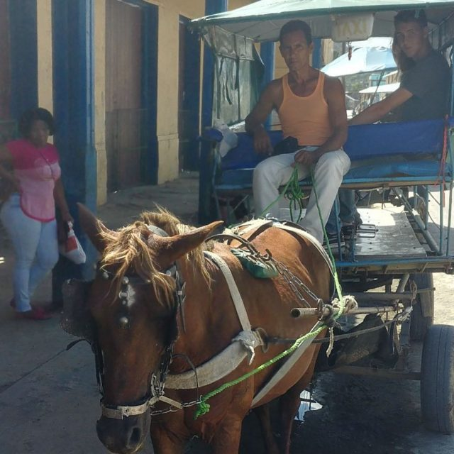 Taxi anyone? sailinggrandiosa sailingwithteenagers horsetaxi traveltonewplaces